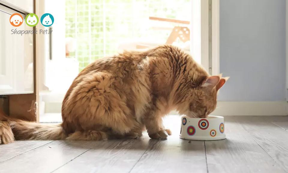 دلایل لزوم استفاده از کنسرو گربه در رژیم غذایی آنها