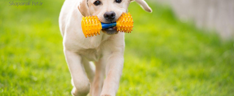 اسباب بازی های سگ