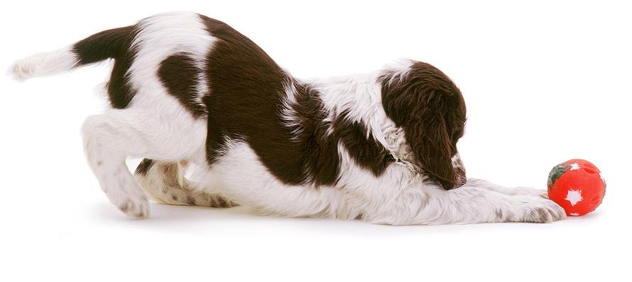 عروسک سگ - عروسک لاتکس سگ