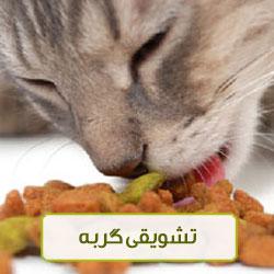 تشویقی گربه