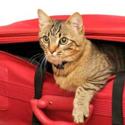 لوازم حمل و نقل گربه