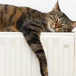 تشک و تخت خواب گربه
