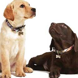قلاده و پوزه بند سگ