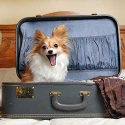 لوازم حمل و نقل سگ