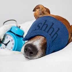 تشک و تختحواب سگ