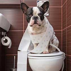پد دستشویی سگ