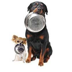 ظرف آب و غذا سگ