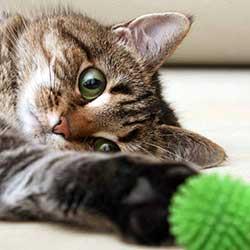 توپ و لیزر گربه