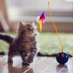 اسباب بازی متحرک گربه