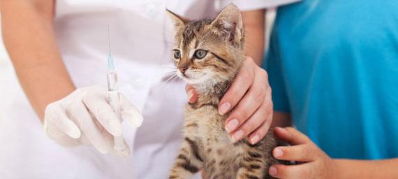 واکسیناسیون گربه