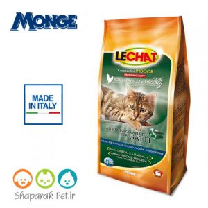 غذای گربه لیچت داخل خانه